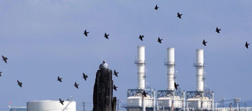сколько нефти добывают в США