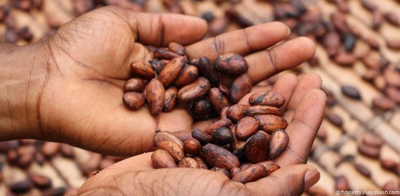 какао в ладонях